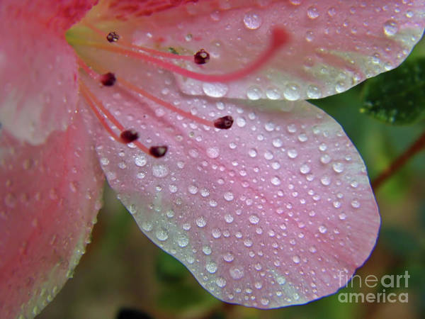 Photograph - Can You Count The Raindrops by D Hackett
