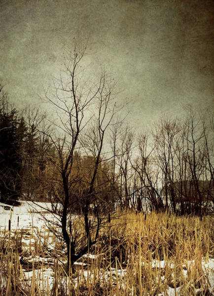 Photograph - Can You Feel The Chill by Reynaldo Williams