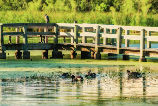 Photograph - Canada Geese Early Morning Bath by Edward Peterson