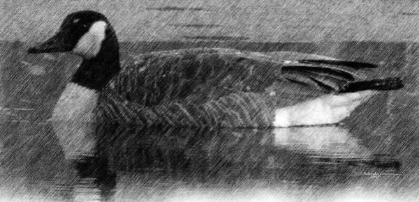Digital Art - Canada Goose by Artful Oasis