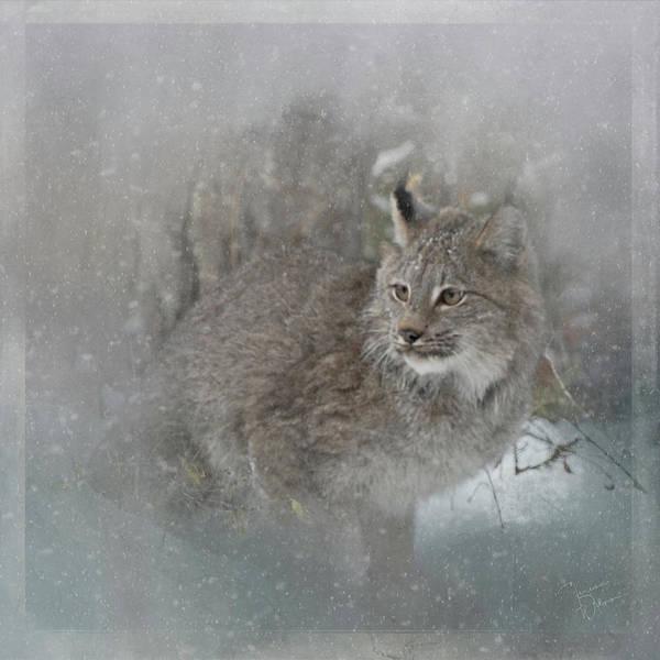 Photograph - Canada Lynx Painted by Teresa Wilson