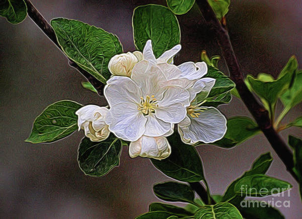 Photograph - Canadian Dogwood by Vivian Martin