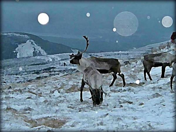 Wall Art - Digital Art - Canadian Elk By Moonlight by Raven Hannah