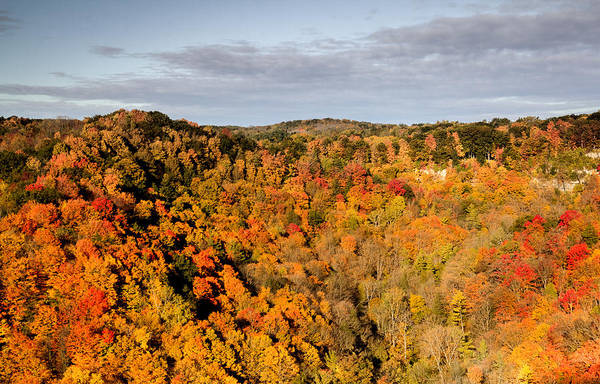 Photograph - Canadian Fall Landscape by Nick Mares