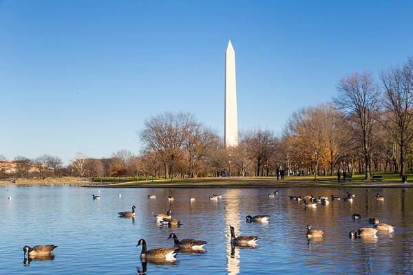 Photograph - Canadian Geese And Washington Monument by SR Green