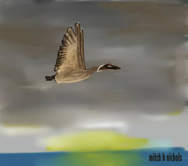 Thanksgiving Dinner Digital Art - Canadian Goose by Mitch Nichols