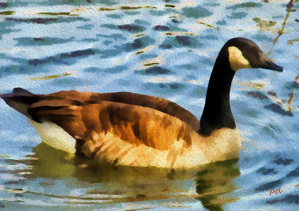 Water Foul Painting - Canadian Goose by Patty Dunlap