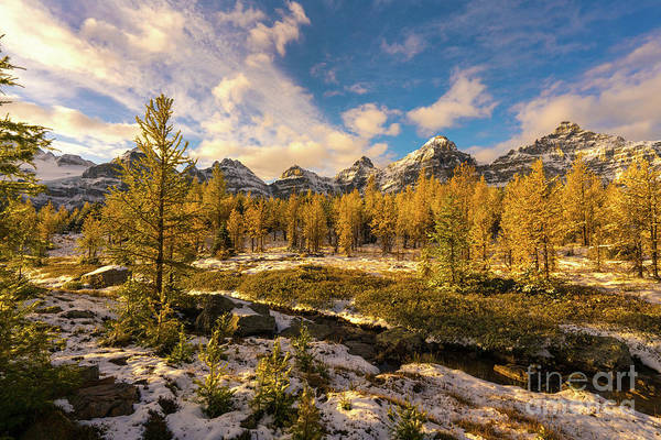 Sentinel Photograph - Canadian Rockies Golden Larches In Larch Valley by Mike Reid