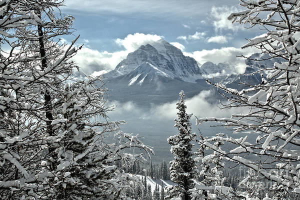 Photograph - Canadian Rockies Through The Snow Covered Trees by Adam Jewell
