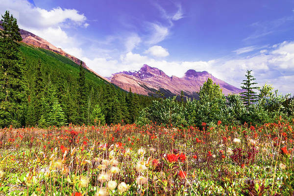 Suggestion Photograph - Canadian Rocky Mountain Indian Paintbrush by Norma Brandsberg