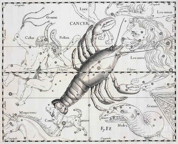 Backdrop Drawing - Cancer, The Zodiacal Constellation Of The Crab by Johann Hevelius