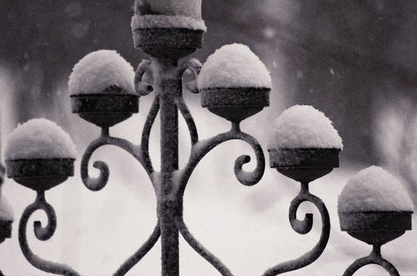 Photograph - Candelabra In The Snow by Susan Maxwell Schmidt