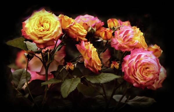 Photograph - Candlelight Rose  by Jessica Jenney