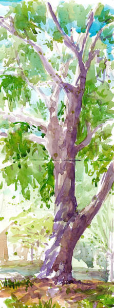 Painting - Candler Park Oak by Cameron Berglund