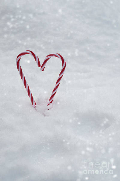 Wall Art - Photograph - Candy Canes In Snow by Amanda Elwell
