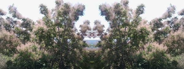 Photograph - Candy Floss Greek Bush by Julia Woodman