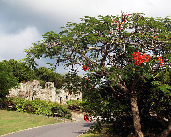 Photograph - Caneel Bay Ruins by Pauline Walsh Jacobson