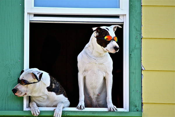 Photograph - Canine Comedians by Diana Hatcher