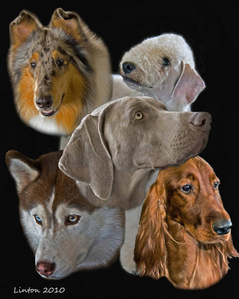 Photograph - Canine Montage by Larry Linton