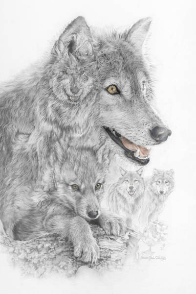 Minnesota Drawing - Canis Lupus V The Grey Wolf Of The Americas - The Recovery  by Steven Paul Carlson