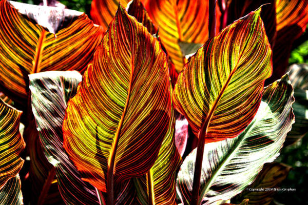 Photograph - Canna 26106hdr by Brian Gryphon