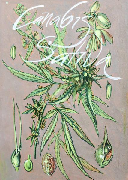 Dope Mixed Media - Cannabis Sativa.marijuana Botanical by Vali Irina Ciobanu