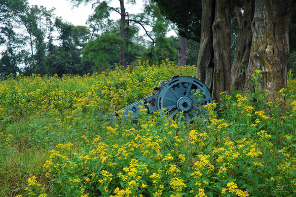 Photograph - Cannon And Gold by Sam Davis Johnson
