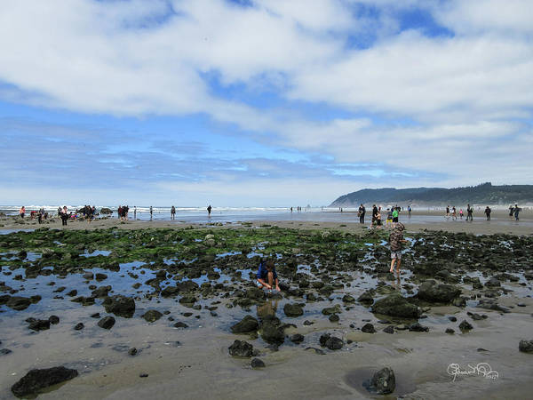 Photograph - Cannon Beach Tide Pools by Susan Molnar