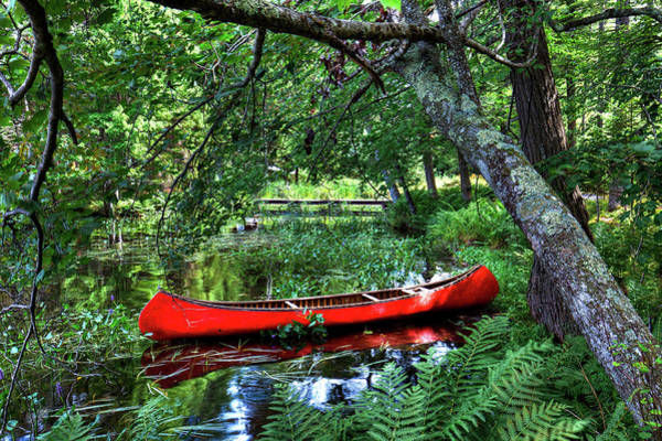 Photograph - Canoe Under The Canopy by David Patterson