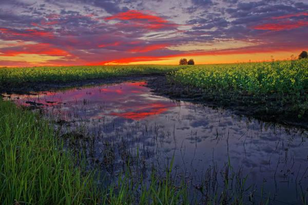 Photograph - Canola At Dawn by Dan Jurak