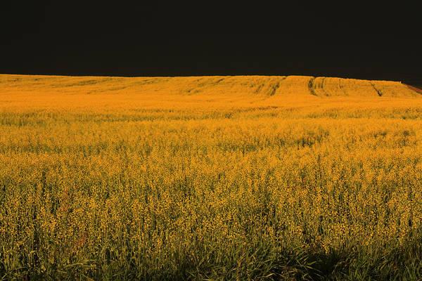 Photograph - Canola Storm by David Matthews