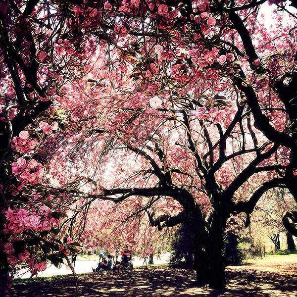 Photograph - Canopy Of Blossoms by Natasha Marco