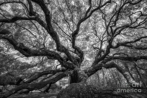 Wall Art - Photograph - Canopy Of Color In Bw  by Michael Ver Sprill