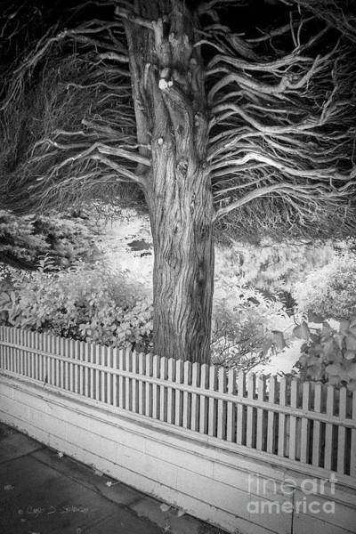 Photograph - Canopy Tree by Craig J Satterlee