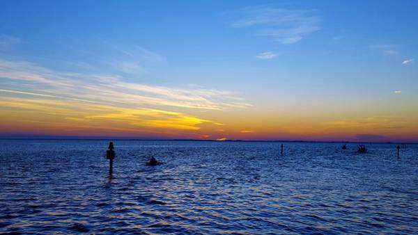 Florida Wall Art - Photograph - Can't Get Enough by Ric Schafer