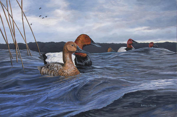 Painting - Canvasbacks by Anthony J Padgett