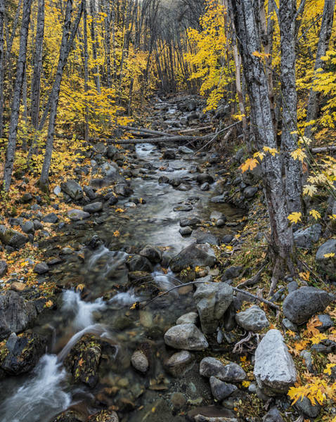 Photograph - Canyon Creek In Autumn by Loree Johnson