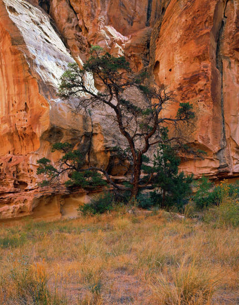 Photograph - Canyon View With Tree by Paul Breitkreuz