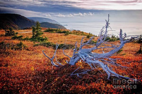 Photograph - Cape Breton Highlands by Scott Kemper