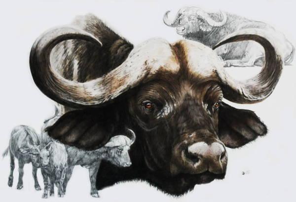 Mixed Media - Cape Buffalo by Barbara Keith