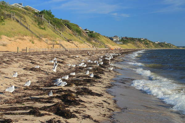 Wall Art - Photograph - Cape Cod Bay Beach And Gulls Truro  by John Burk