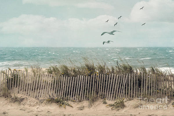 Barrier Photograph - Cape Cod Beach Scene by Juli Scalzi