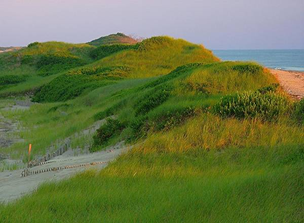 Photograph - Cape Cod Dunes by Juergen Roth