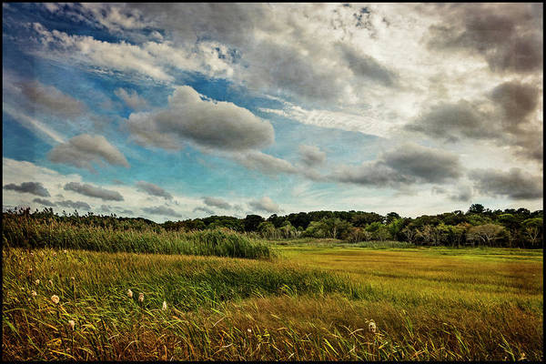 Photograph - Cape Cod Marsh 2 by Frank Winters