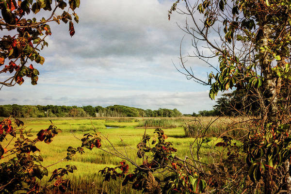 Photograph - Cape Cod Marsh 3 by Frank Winters