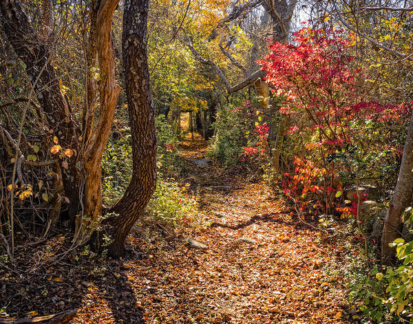 Photograph - Cape Cod Path by Frank Winters