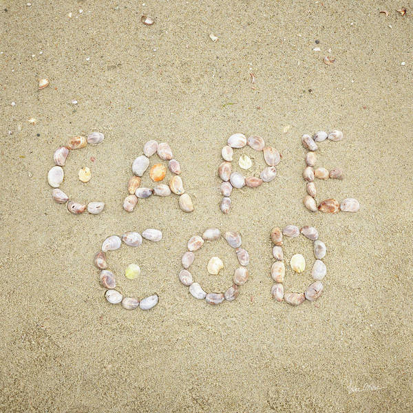 Photograph - Cape Cod Seashells by Luke Moore