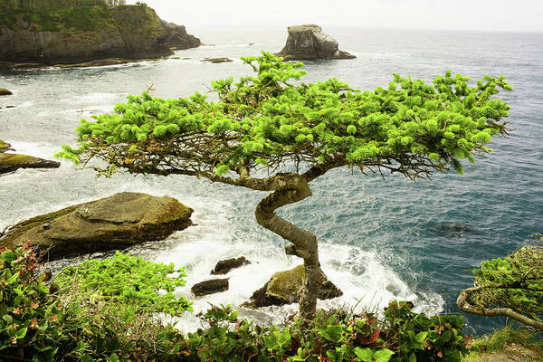 Photograph - Cape Flattery by Craig Ratcliffe
