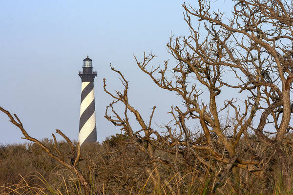 Photograph - Cape Hatteras Lighthouse Through The Brush by Liza Eckardt