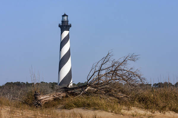 Photograph - Cape Hatteras Lighthouse With Driftwood by Liza Eckardt